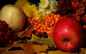 Картинка листья, яблоко, рябина, дары осени