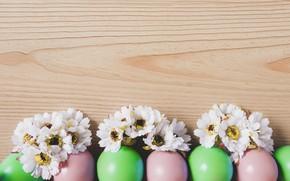 Картинка яйца, пасха, Праздник, хризантемы