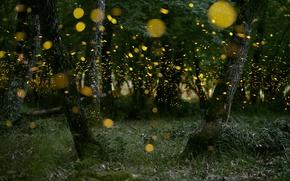 Обои лес, природа, светлячки, вечер, боке