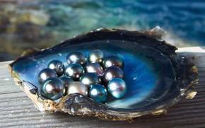 Картинка море, свет, блеск, ракушка, жемчужины, черный жемчуг