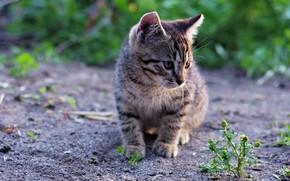 Картинка трава, котенок, размытие