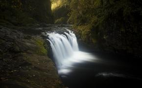 Картинка вода, деревья, камни, мох, Орегон, США, ущелье реки Колумбия, Орлиный ручей