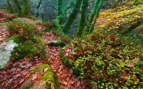 Обои листья, мох, Англия, деревья, лес, осень