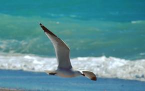 Картинка mar, Gaviota, Pájaro, vuelo