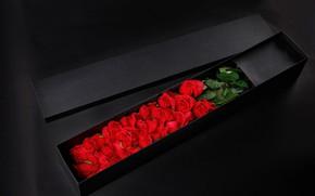 Картинка фон, коробка, розы, красные