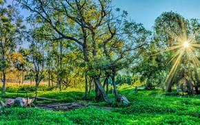 Картинка зелень, лес, трава, солнце, лучи, деревья, парк, HDR, Австралия, Warrumbungle National Park