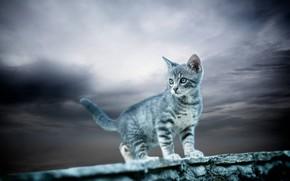 Обои небо, малыш, котёнок