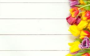 Картинка цветы, весна, colorful, тюльпаны, fresh, wood, flowers, beautiful, tulips, spring, bright