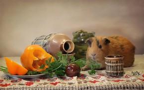 Картинка животные, праздник, морская свинка, февраль, композиция