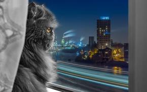 Обои взгляд, город, окно, персидская кошка
