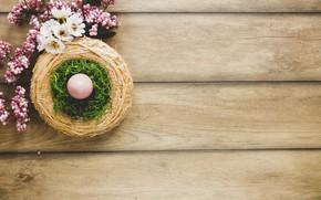 Картинка яйцо, мох, Ветки, пасха, гнездо, Праздник, хризантемы, декор