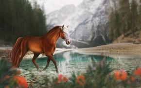 Обои природа, горы, лошадь, озеро, by Fiirewolf