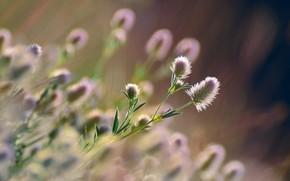 Картинка трава, солнце, макро, цветы, природа, боке