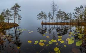 Обои туман, озеро, утро