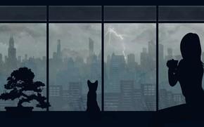 Обои кошка, девушка, город, дождь, by Aquelion