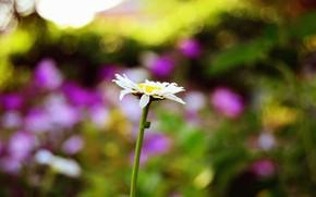 Обои растение, цветок, лето, макро, размытость