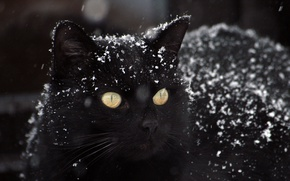 Картинка зима, черный картинки, снег фото, кот обои