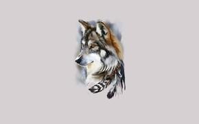 Картинка морда, волк, перья