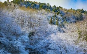 Картинка зима, иней, снег, деревья, горы, склон