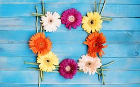 Картинка цветы, герберы, голубой фон
