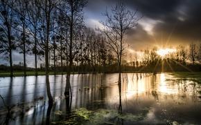Картинка вода, деревья, забор, утро