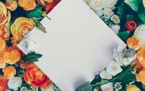 Картинка white, Roses, paper