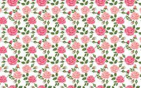 Обои розовый, бутоны, розы, цветы