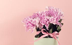 Картинка цветы, букет, ваза, Хризантемы