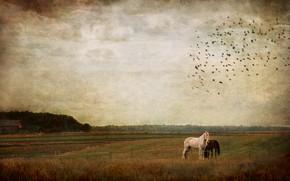 Картинка поле, осень, лес, небо, облака, пейзаж, птицы, природа, пасмурно, настроение, печаль, кони, стая, деревня, лошади, …