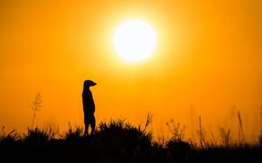 Картинка природа, Silhouette, Meerkat
