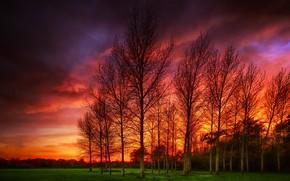 Обои закат, пейзаж, деревья