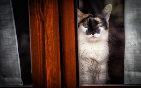 Обои окно, взгляд, кошка
