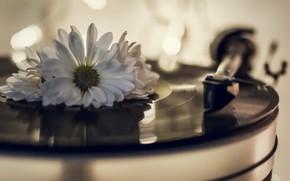 Картинка цветок, винил, проигрыватель пластинок