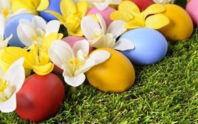 Картинка цветы, праздник, яйца, весна, пасха, grass, травка, flowers, spring, Easter, eggs, holiday