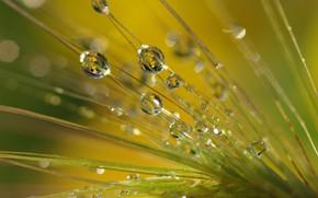 Картинка капли, макро, природа, роса, Трава, утро