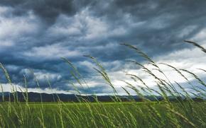 Картинка поле, небо, трава, макро, тучи