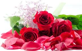 Картинка цветы, букет, лепестки, Розы