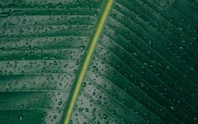 Обои капли, листья, зелень, вода