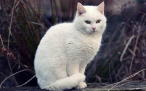 Обои кот, трава, белый, кошка, боке