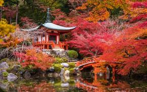 Обои камни, осень, пруд, пагода, Япония, Киото, кусты, деревья, мостик, парк