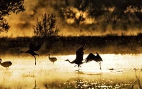 Обои птицы, туман, озеро, утро