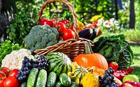 Обои морковь, яблоки, виноград, корзина, фрукты, зелень, тыква, огурцы, баклажаны, капуста, сад, овощи, помидоры, арбуз, перец