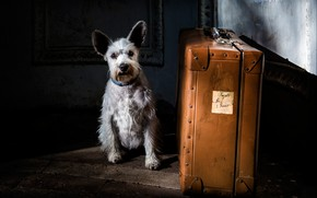 Картинка собака, чемодан, пёсик