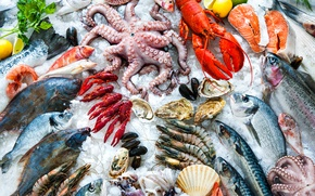 Обои Different types of seafood, white meats, ice