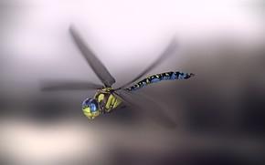 Картинка стрекоза, арт, monteillard damien, Blue emperor dragonfly