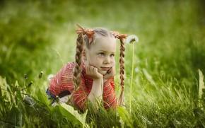 Картинка лето, трава, взгляд, природа, девочка, веснушки, косички, бантики, одуванчики, ребёнок, Olga Nikulochkina