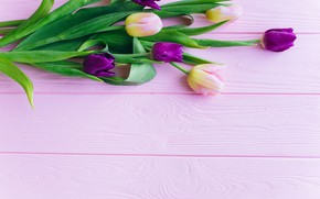 Картинка цветы, тюльпаны, розовые, fresh, wood, pink, flowers, beautiful, tulips, spring, purple, tender