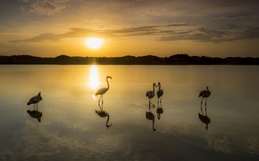 Картинка закат, птицы, озеро, фламинго