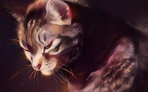 Картинка кот, сидит, смотрит вниз, by Pixxus