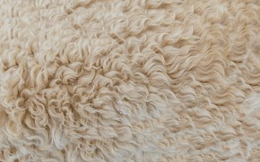 Картинка текстура, шерсть, шкура